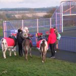 Christmas Community Event with donkeys